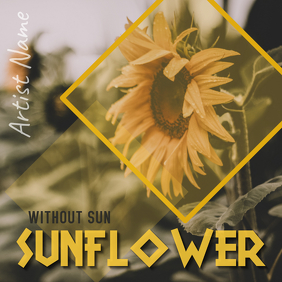 Sunflower without sun