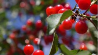 sweet seasonal tree YouTube-miniature template