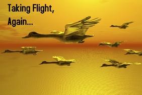 Taking Flight, Again