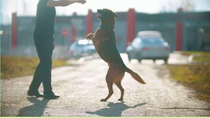 The Dog and Faithful animal. & Road YouTube 缩略图 template
