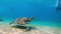 Tortoise In Water Miniatura di YouTube template