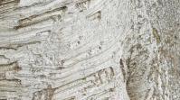 Tree trunk texture Digital Display (16:9) template