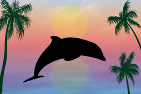 tropic sunset with jumping bottlenose dolphin