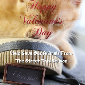 Valentine's Day Video For Pets