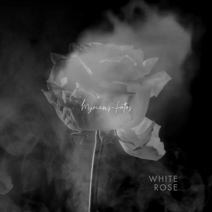 Video White Rose Clean CD Cover Art
