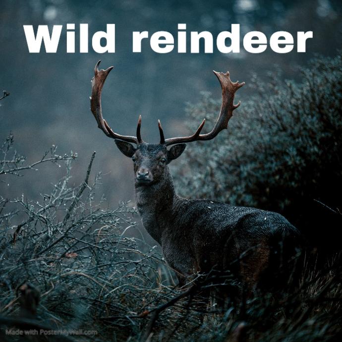 Wild reindeer in the forest Sampul Album template
