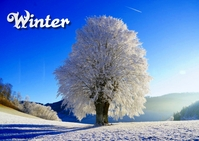 winter Postal template