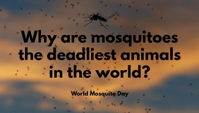 World Mosquito Day Blog Header Template