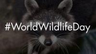 World Wildlife Day 2021 Template Видеообложка профиля Facebook (16:9)